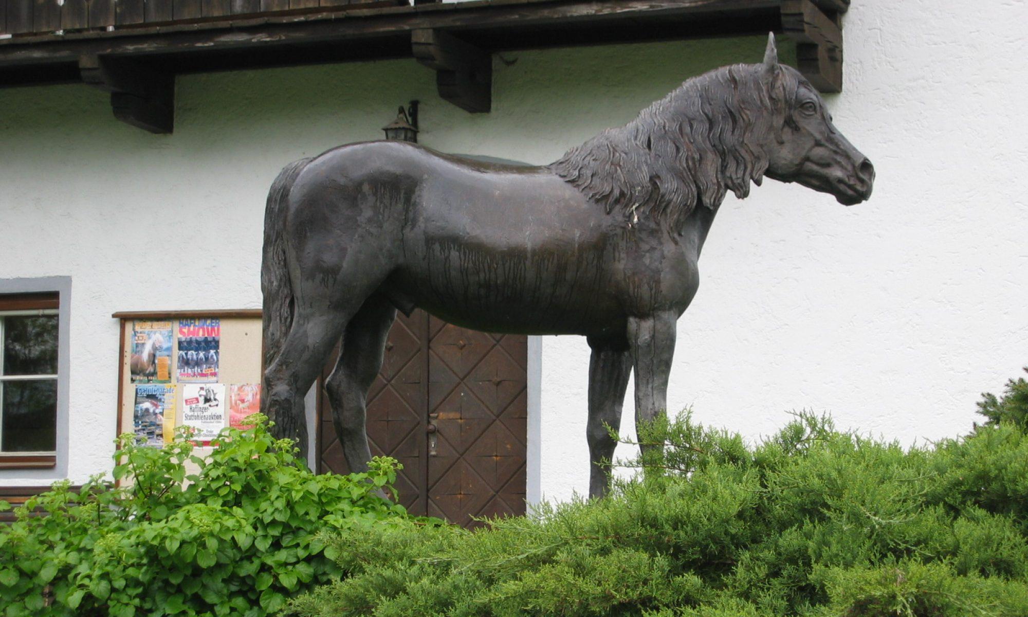 Haflingerzuchtverein Thun